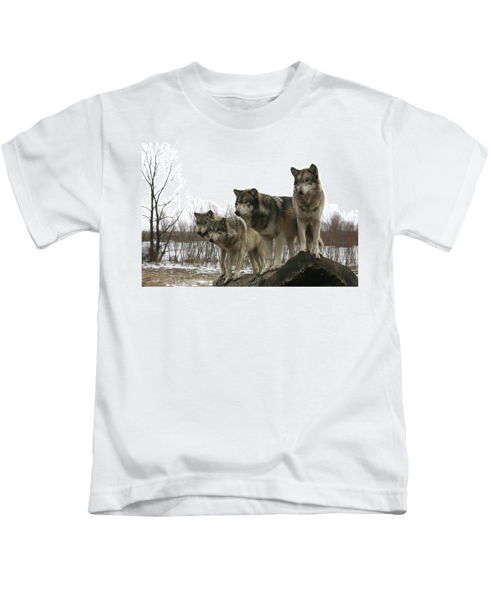 Wolf Wolves Mammals Animals Photography Photograph Winter Wolf Kids T-Shirt featuring the photograph Four Pack by Shari Jardina