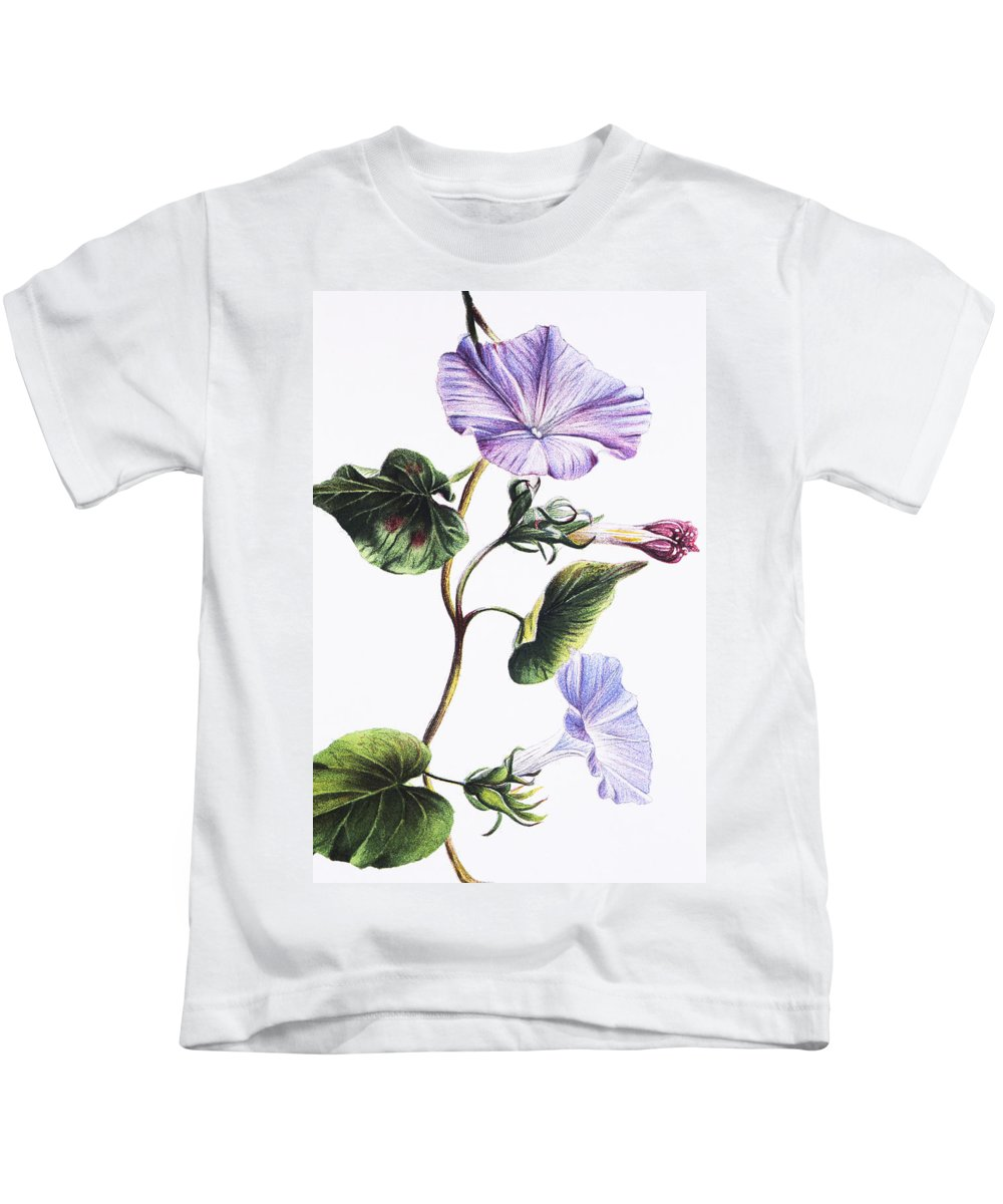 1885 Kids T-Shirt featuring the painting Isabella Sinclair - Pohue by Hawaiian Legacy Archive - Printscapes