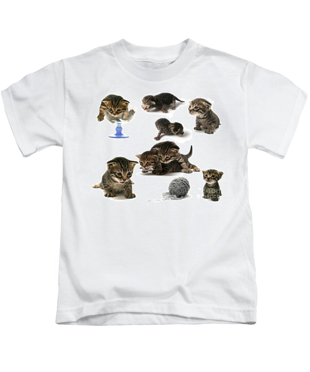 Cat Cats Kids T-Shirt featuring the photograph Kitten Collage by Yedidya yos mizrachi