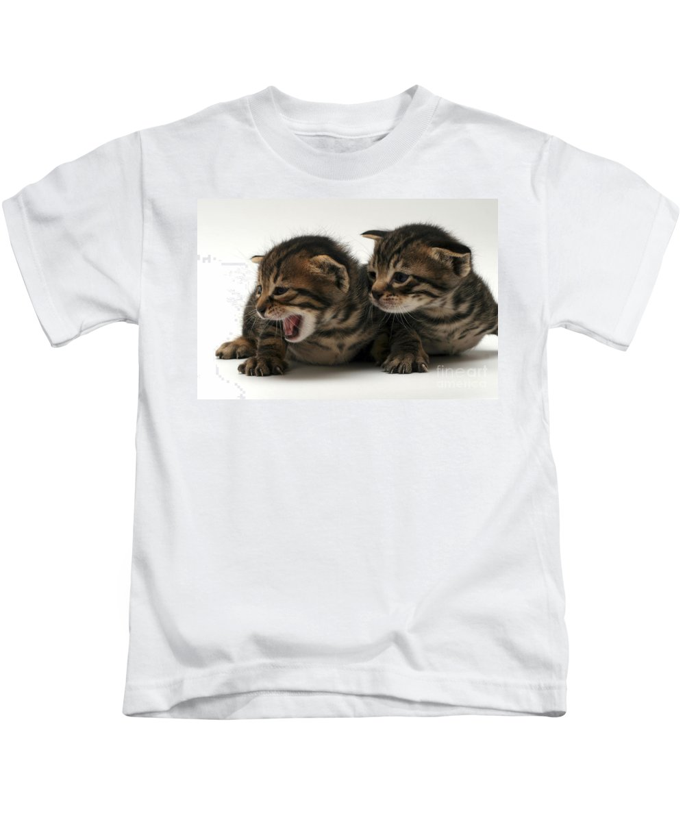 Cat Kids T-Shirt featuring the photograph Kittens by Yedidya yos mizrachi