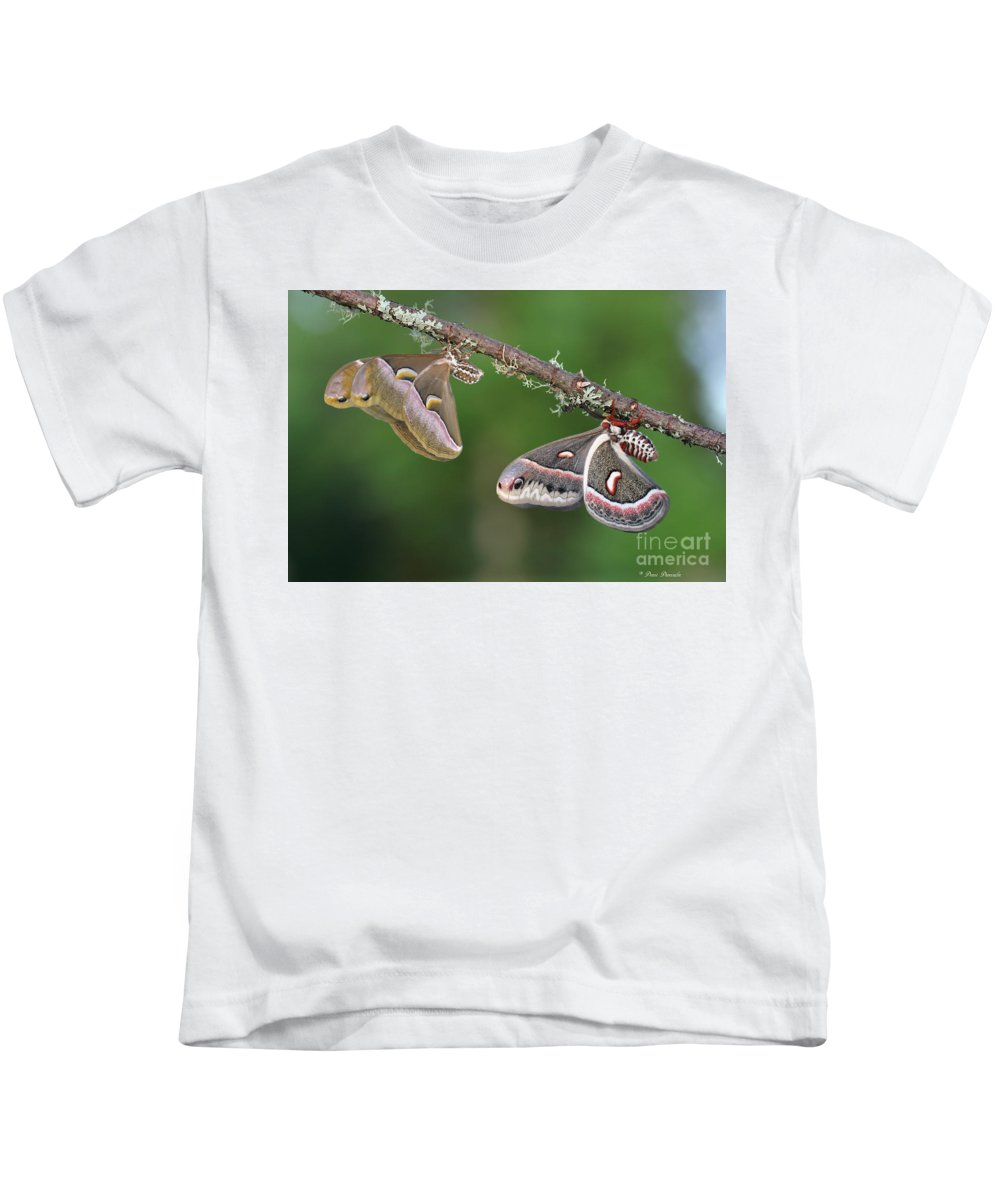 Butterfly Kids T-Shirt featuring the photograph Le Duo Improbable. by Denis Dumoulin