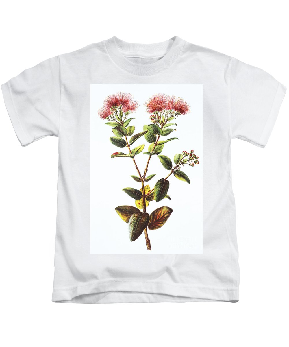 1885 Kids T-Shirt featuring the painting Lehua Ohia Art by Hawaiian Legacy Archive - Printscapes