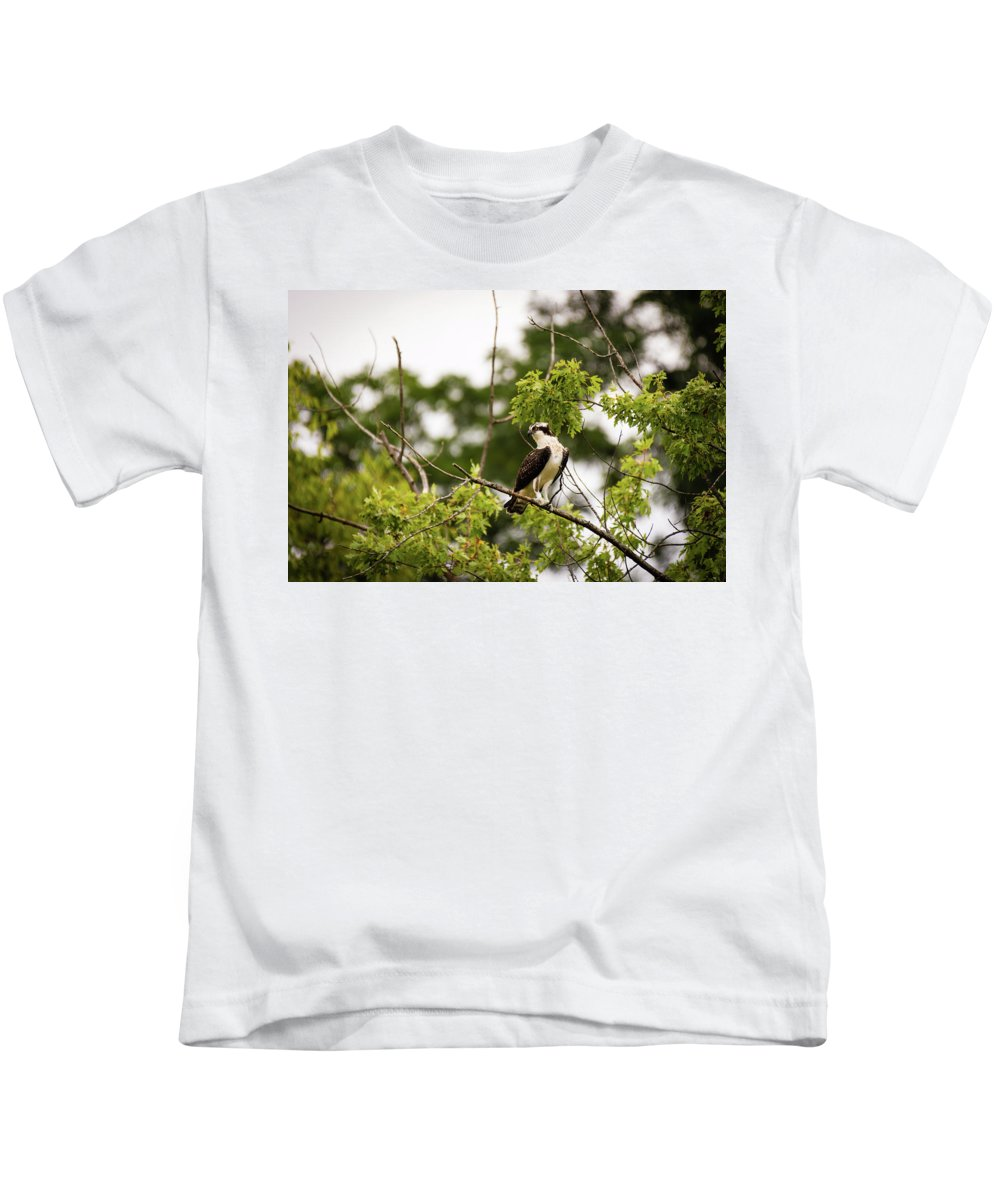 Osprey Kids T-Shirt featuring the photograph Looking For Fish by Henry Kim
