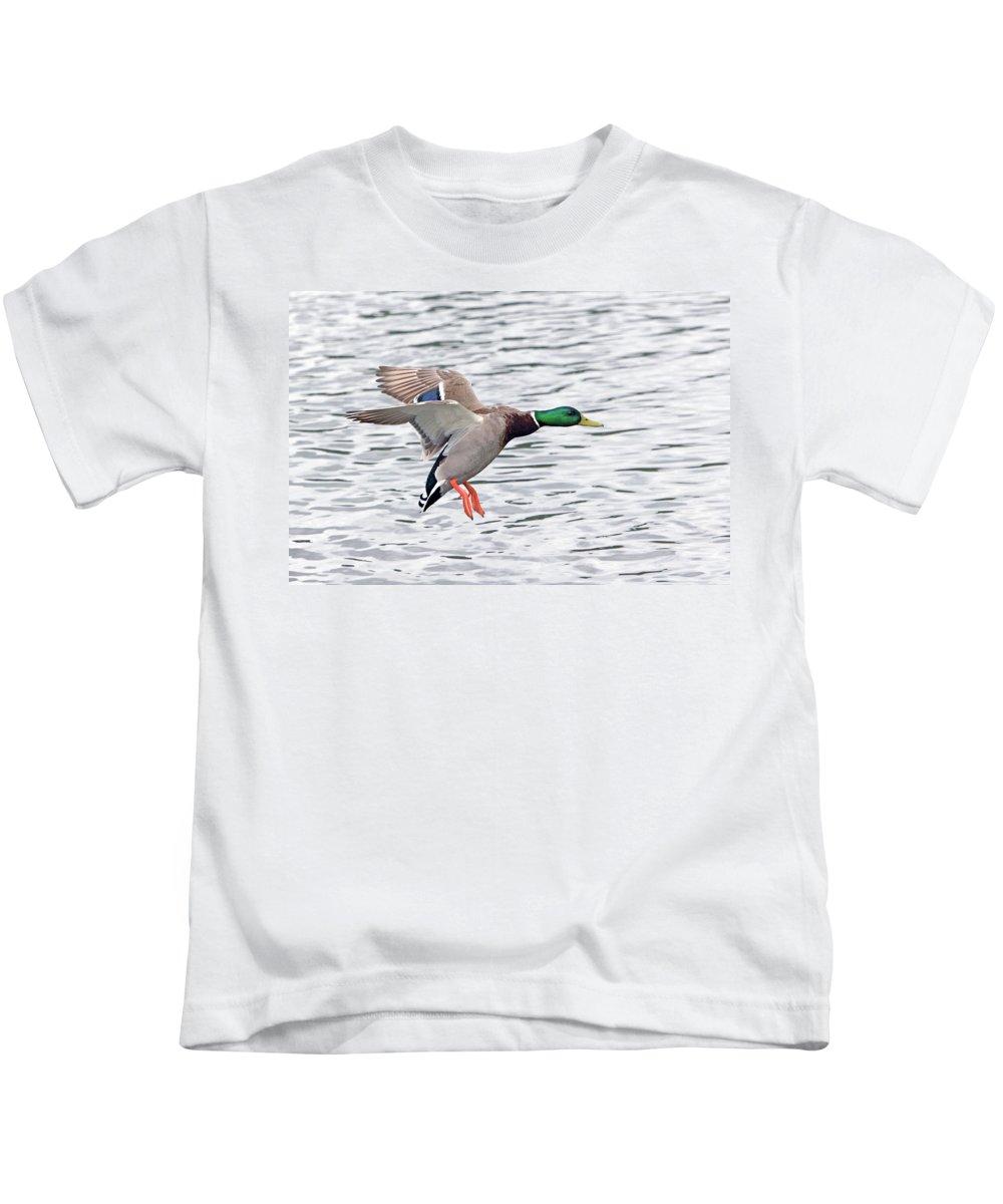 Mallard Drake Kids T-Shirt featuring the photograph Mallard Landing II by Randall Ingalls