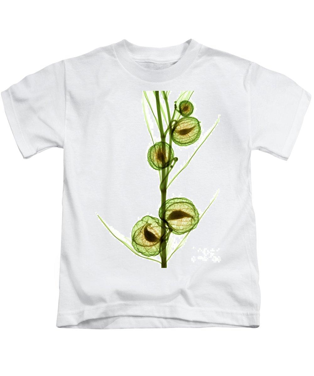 Science Kids T-Shirt featuring the photograph Milkweed, Gomphocarpus Physocarpus by Ted Kinsman