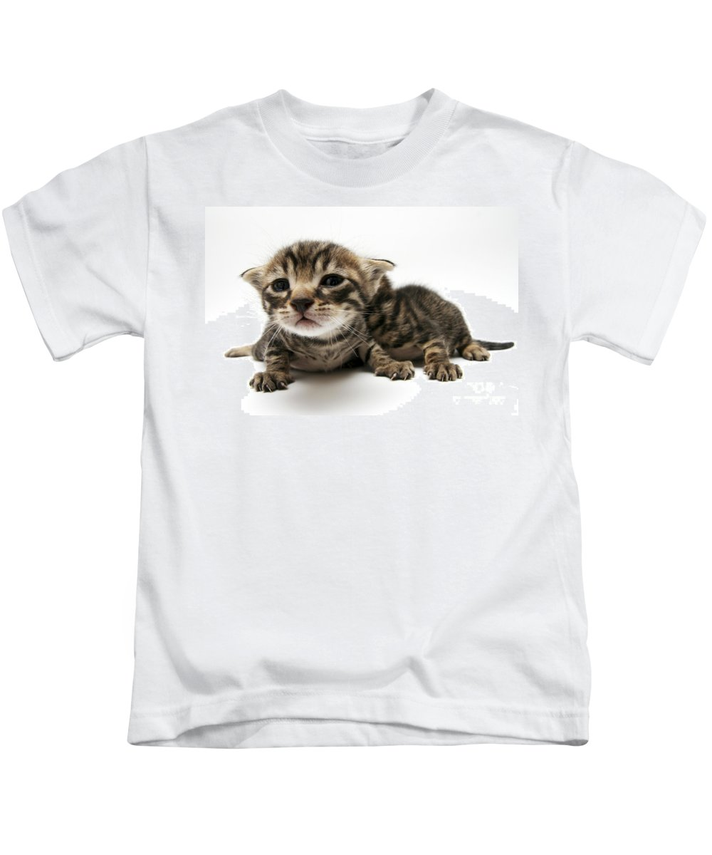Cat Kids T-Shirt featuring the photograph One Week Old Kittens by Yedidya yos mizrachi