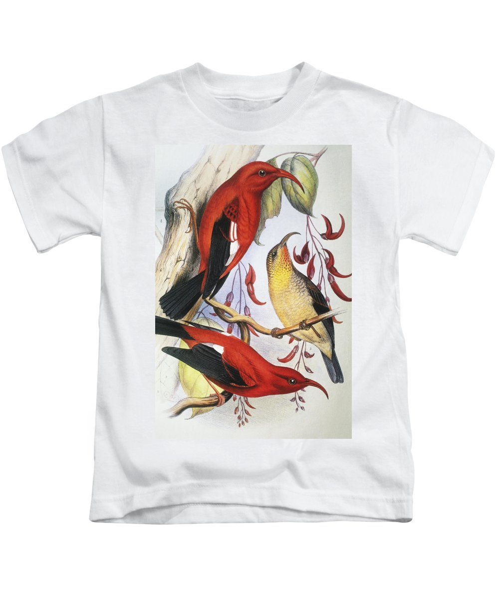 1893 Kids T-Shirt featuring the painting Red Hawaiian Honeycreeper by Hawaiian Legacy Archive - Printscapes
