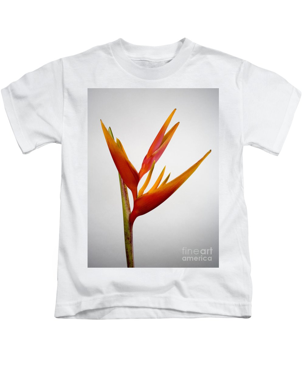 Botanical Kids T-Shirt featuring the photograph Red Heliconia by Tomas del Amo - Printscapes