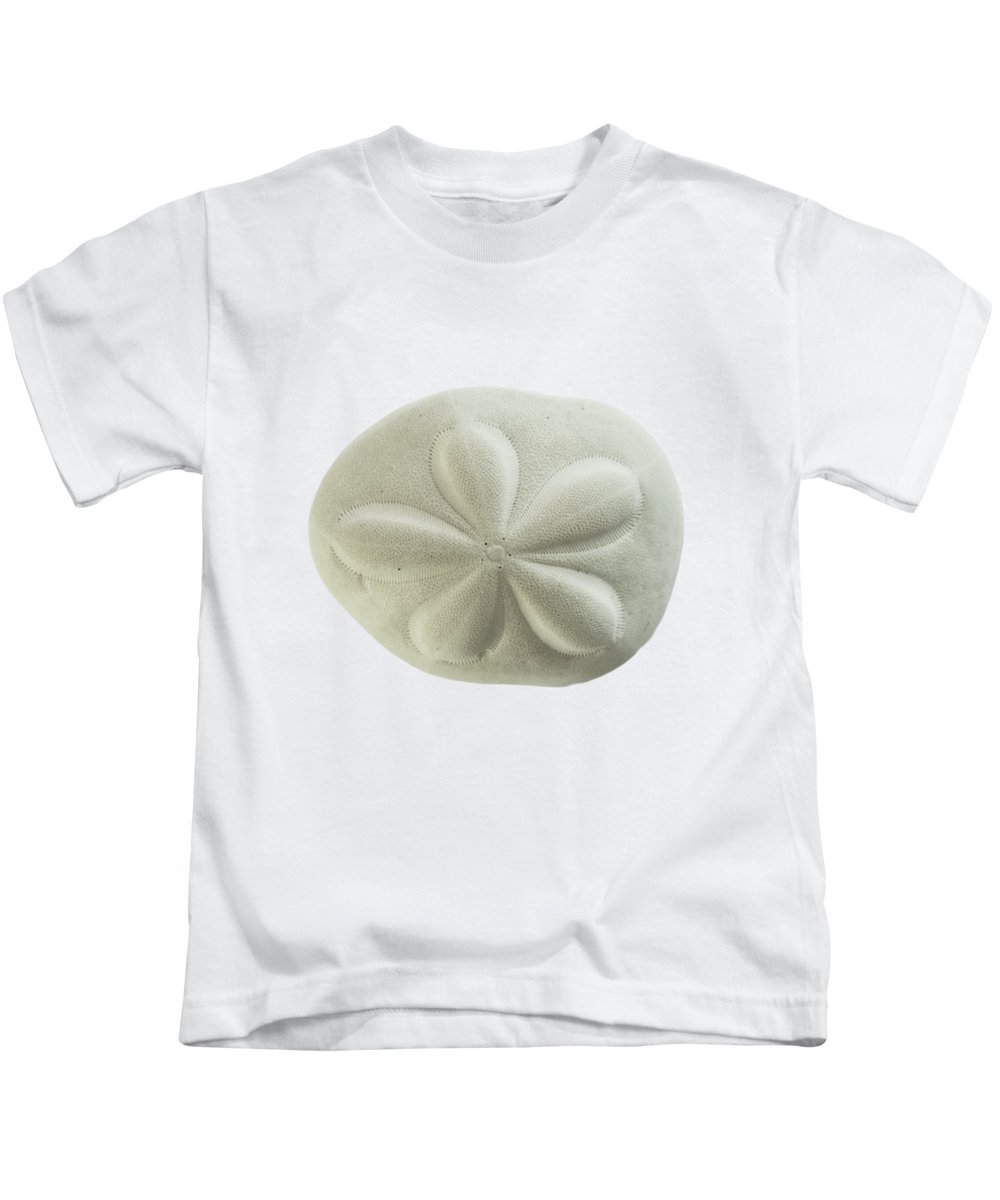 Sand Dollar Kids T-Shirt featuring the photograph Sea Biscuit by Judy Hall-Folde