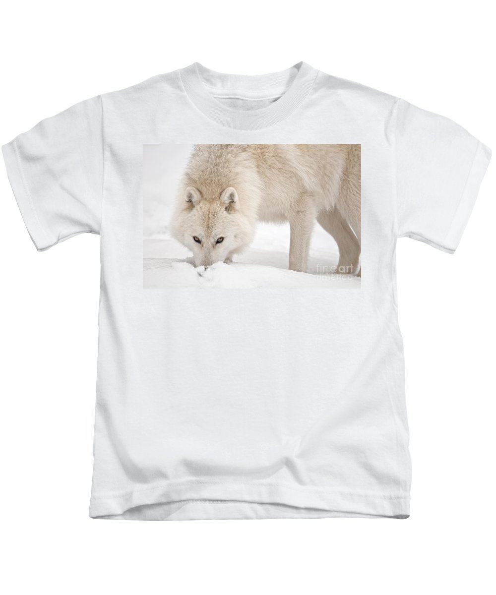 Michael Cummings Kids T-Shirt featuring the photograph Snow Nose by Michael Cummings