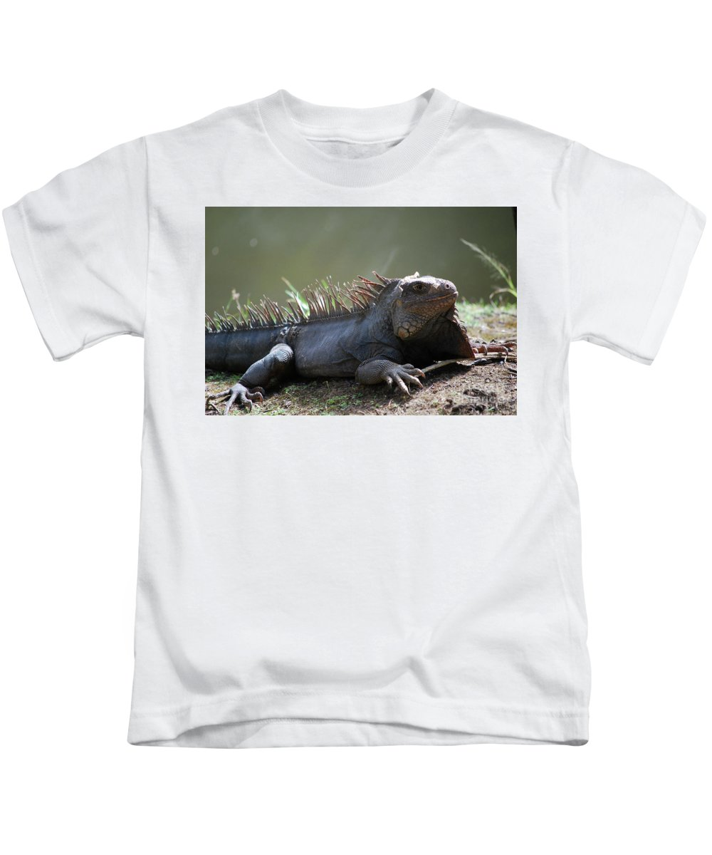 Iguana Kids T-Shirt featuring the photograph Sunning Gray Iguana Sitting Beside Water by DejaVu Designs