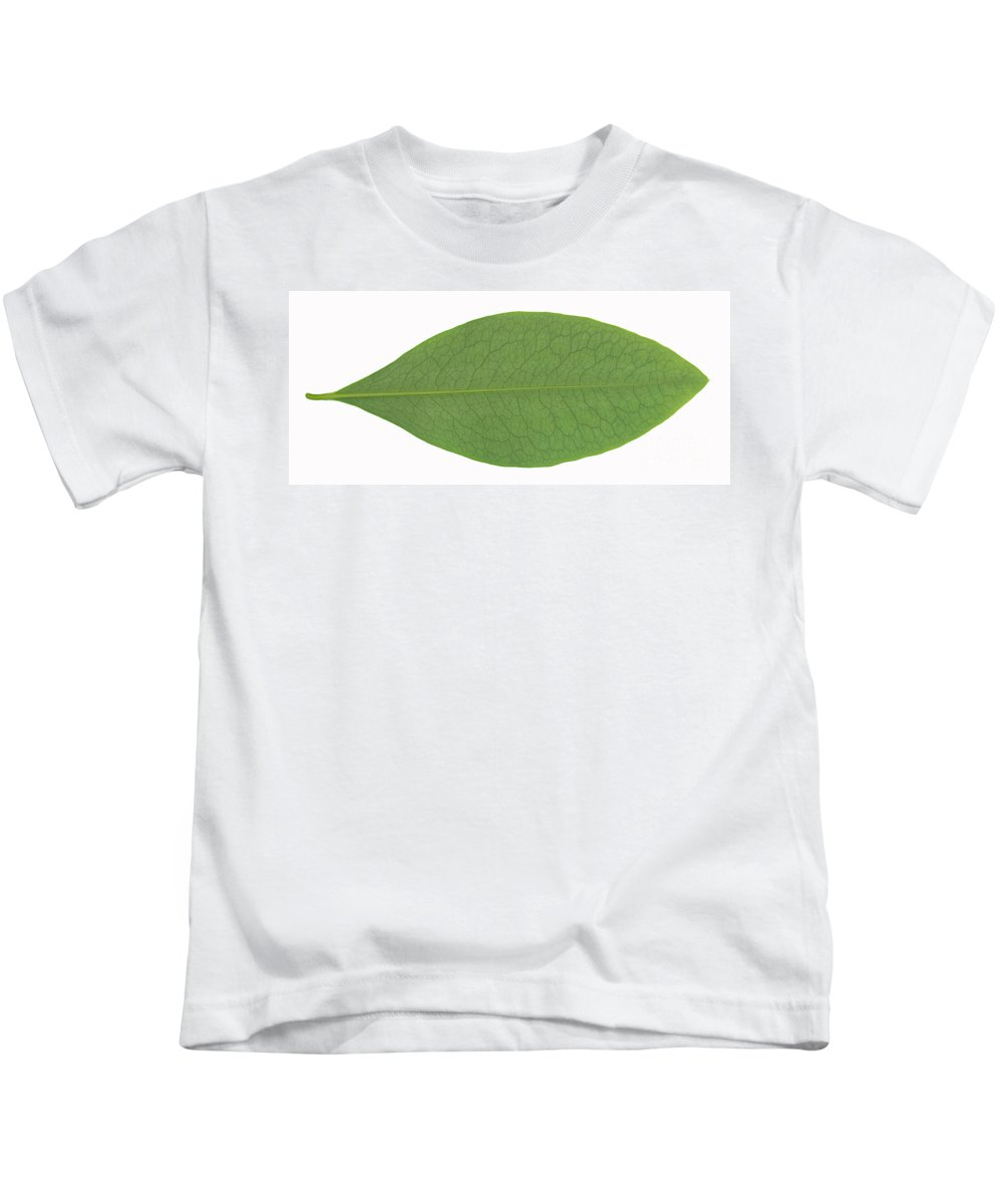 Erythroxylon Coca Kids T-Shirt featuring the photograph Underside Of A Coca Leaf, Erythroxylon by Ted Kinsman