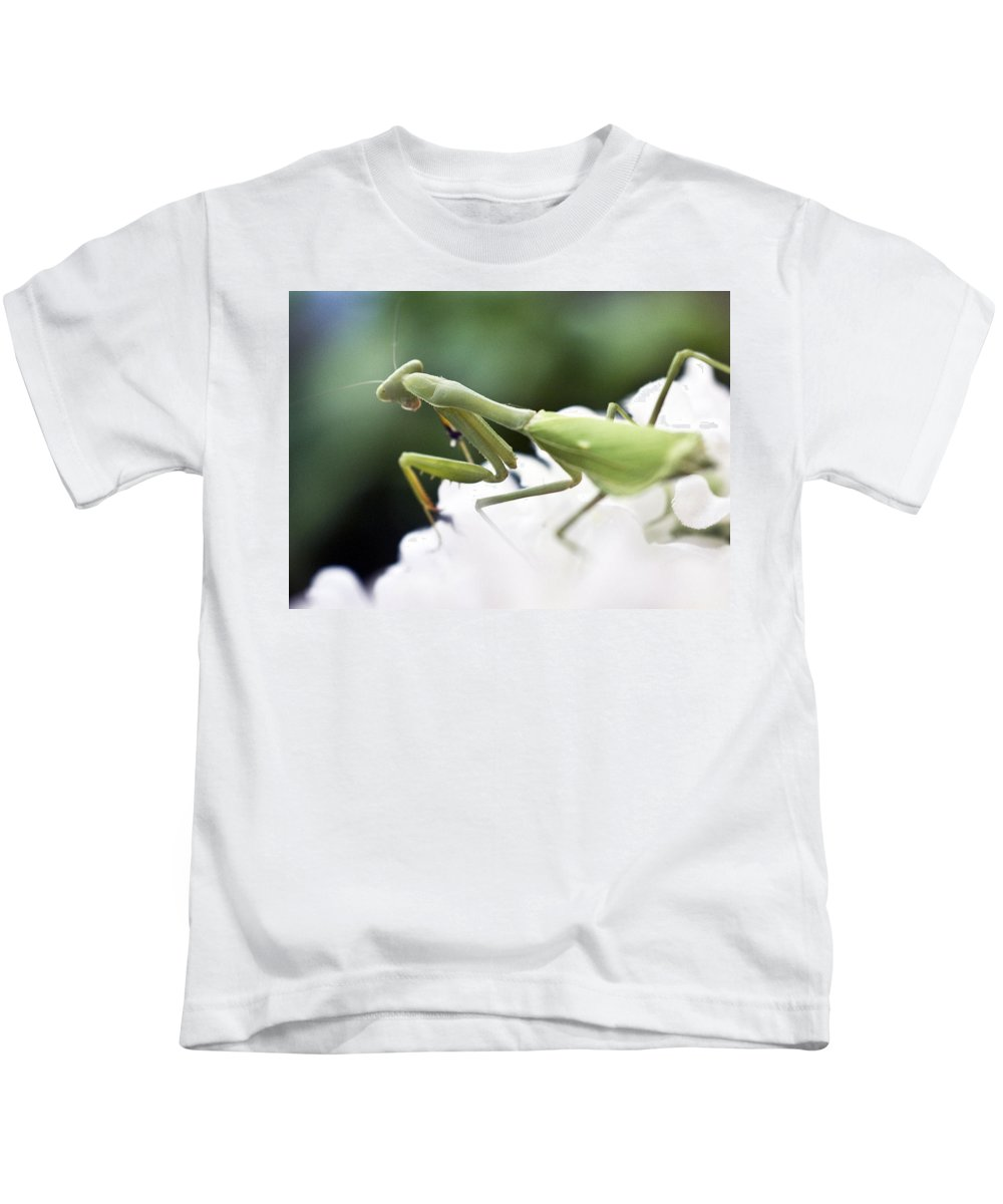 Animals Kids T-Shirt featuring the photograph Watch Me Prey by Norman Andrus