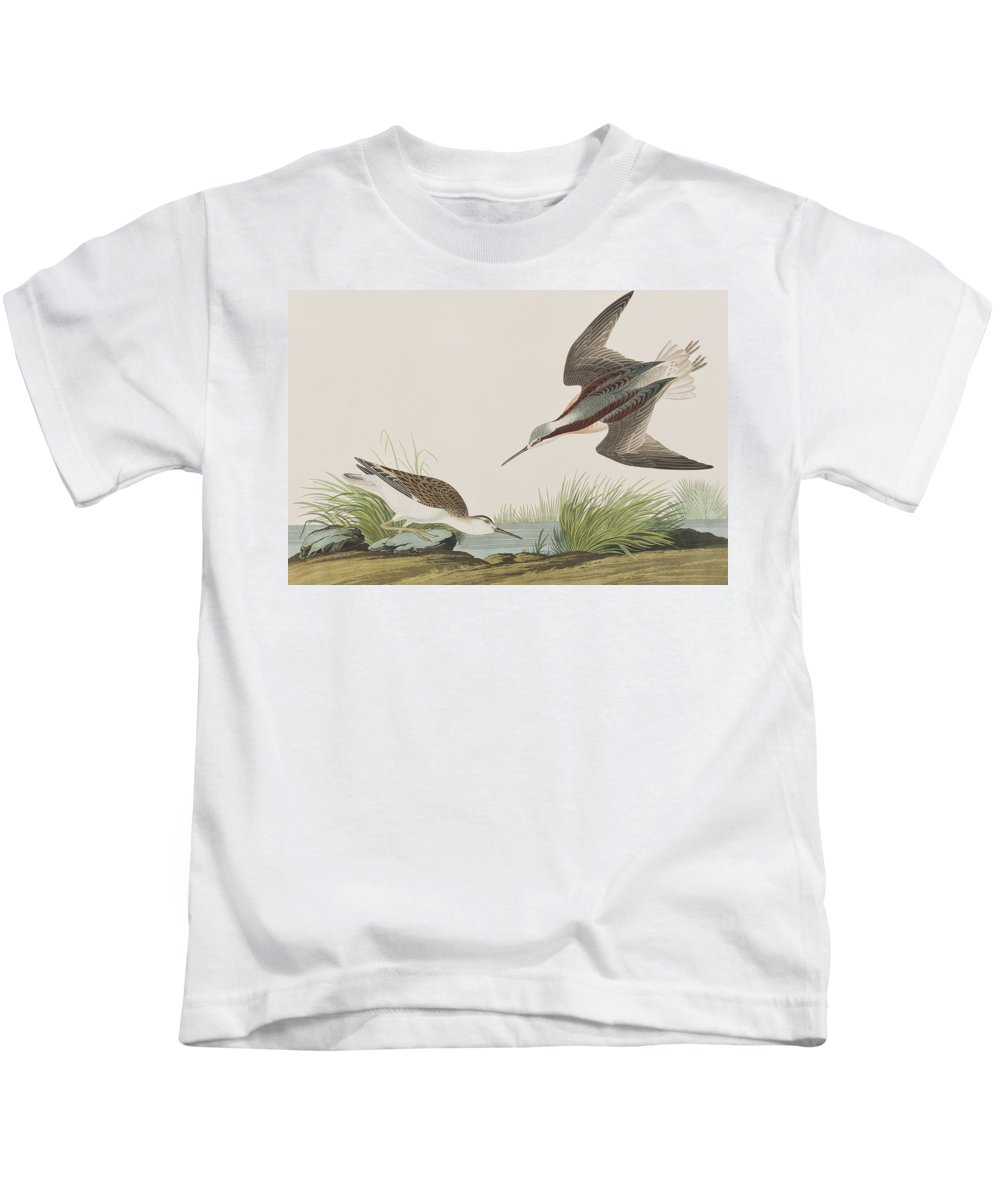 Plate 254 Kids T-Shirt featuring the painting Wilson's Phalarope by John James Audubon