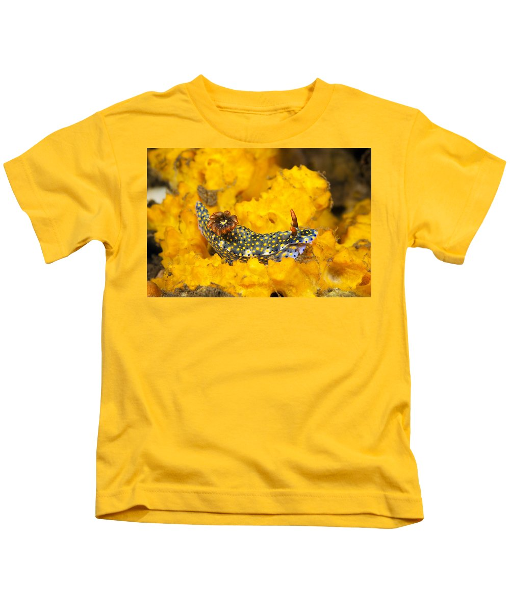 Animal Kids T-Shirt featuring the photograph Nudibranch On Sponge by Dave Fleetham