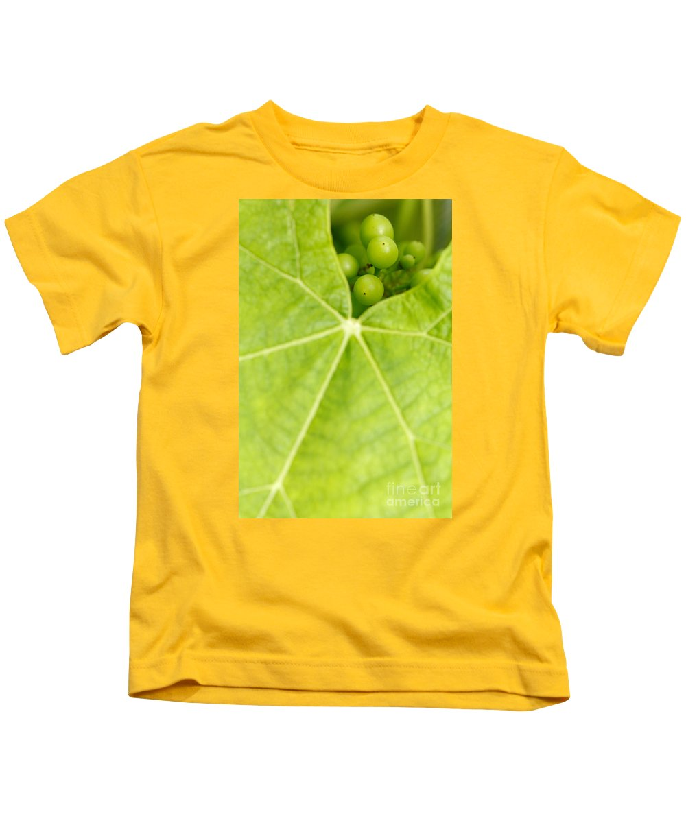 Vineyards Kids T-Shirt featuring the photograph Maturing Wine Grapes by Gaspar Avila