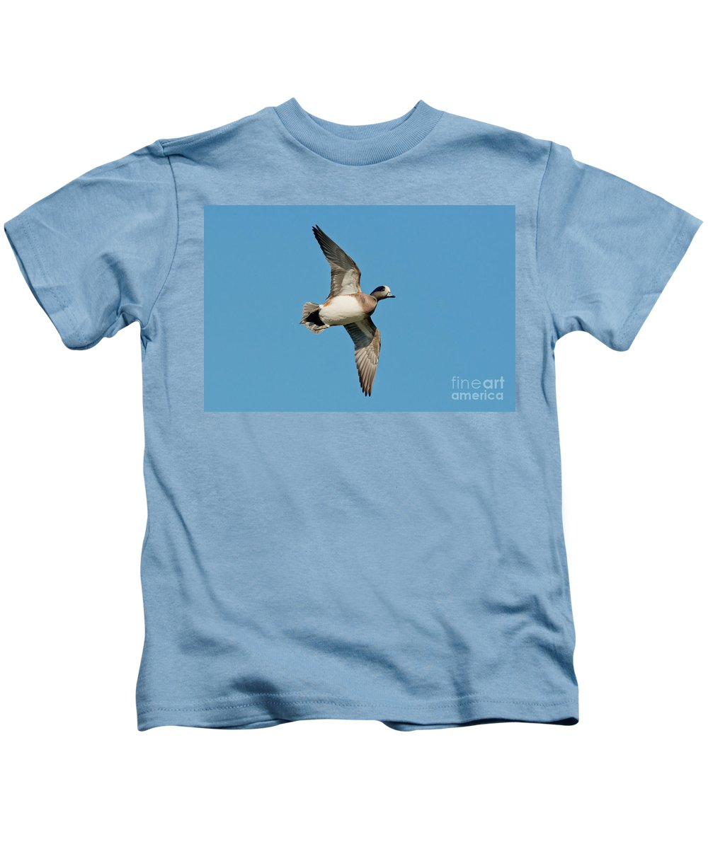 Fauna Kids T-Shirt featuring the photograph American Wigeon Drake by Anthony Mercieca