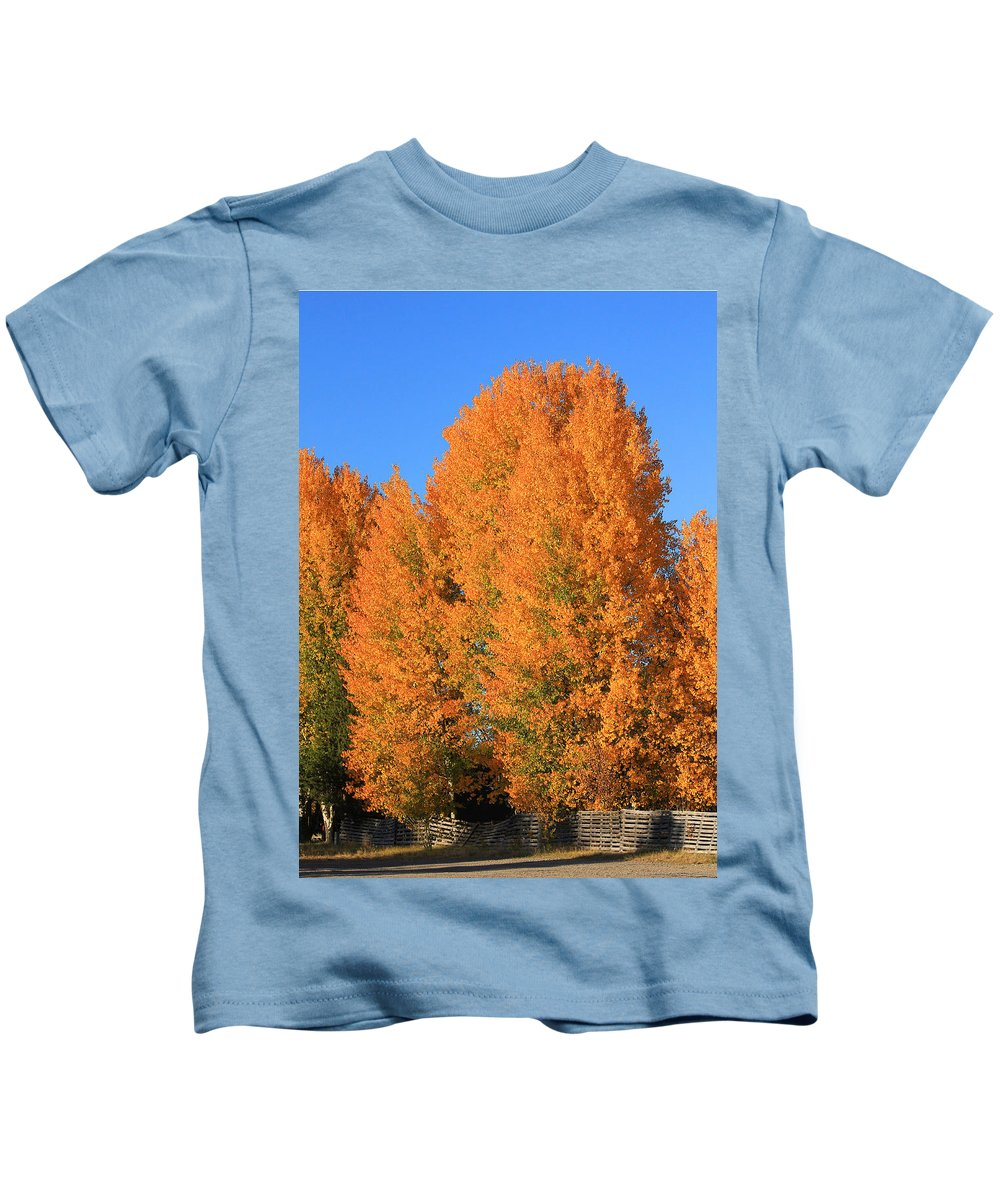 Aspens Kids T-Shirt featuring the photograph Dm5532-aspens In Fall by Ed Cooper Photography