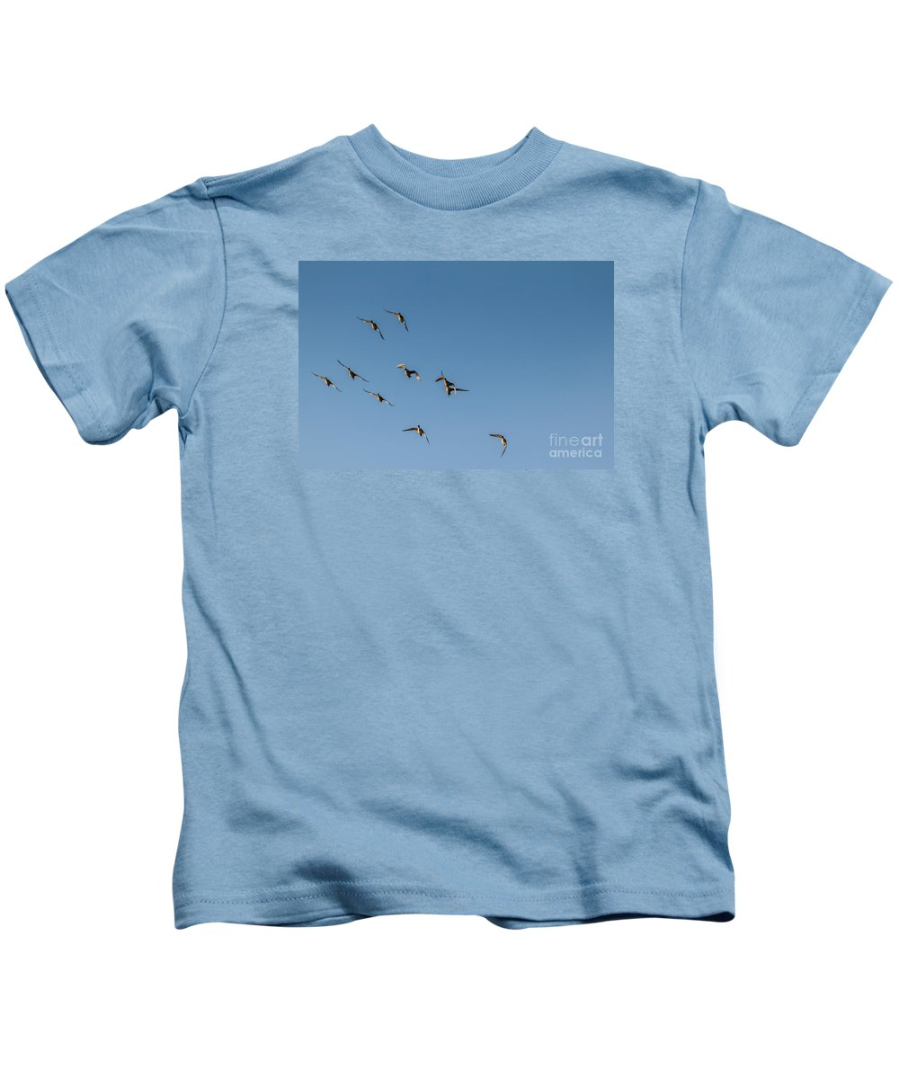 Duck Kids T-Shirt featuring the photograph Northern Pintails by Robert Bales