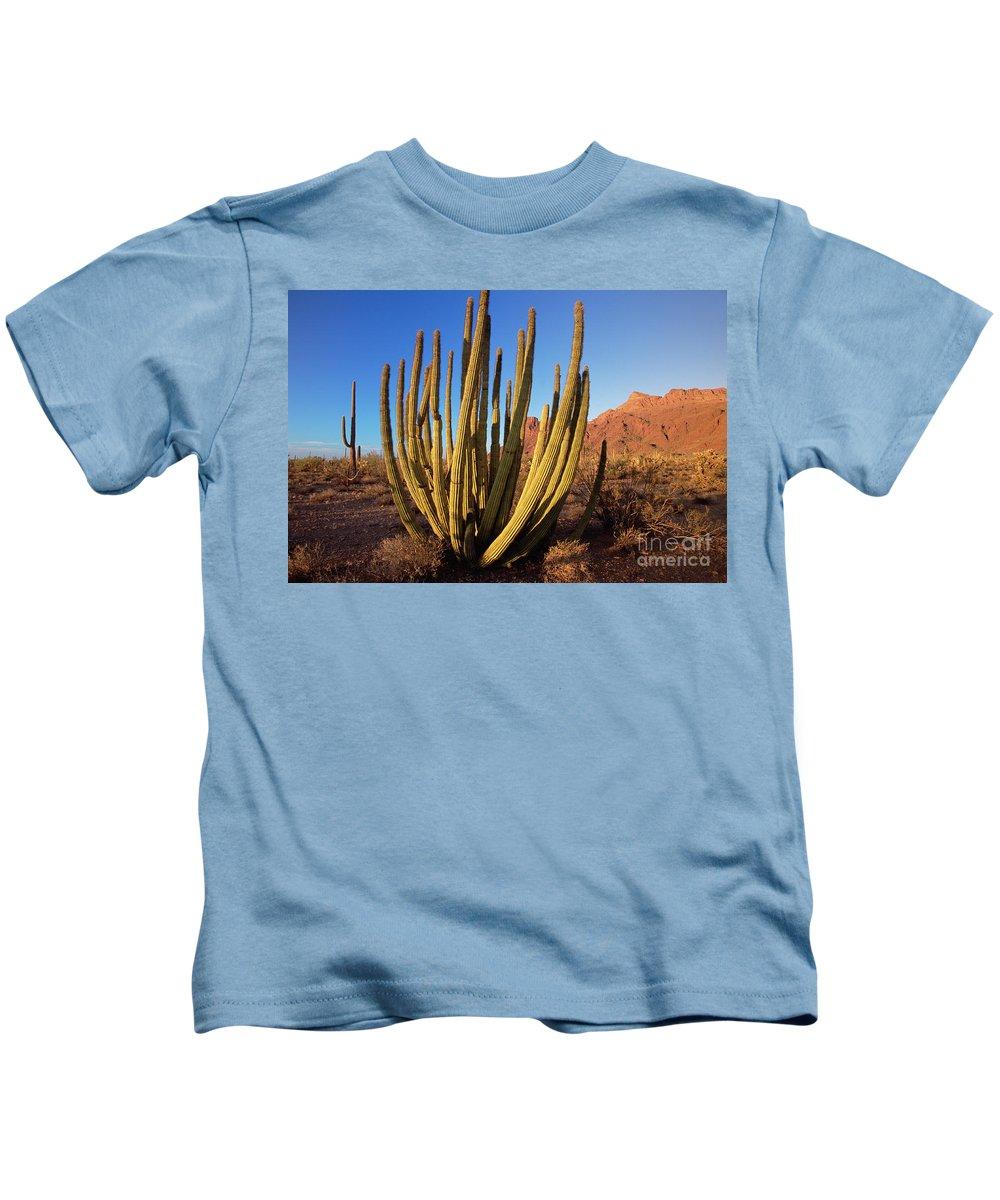 00343712 Kids T-Shirt featuring the photograph Organ Pipe Cactus Natl Monument by Yva Momatiuk John Eastcott