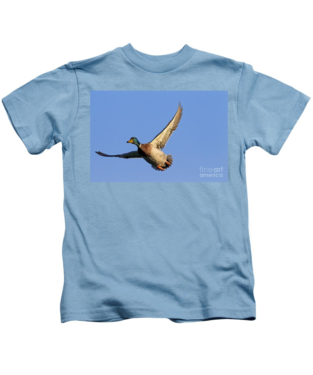 Mallard Kids T-Shirt featuring the photograph 110506p031 by Arterra Picture Library