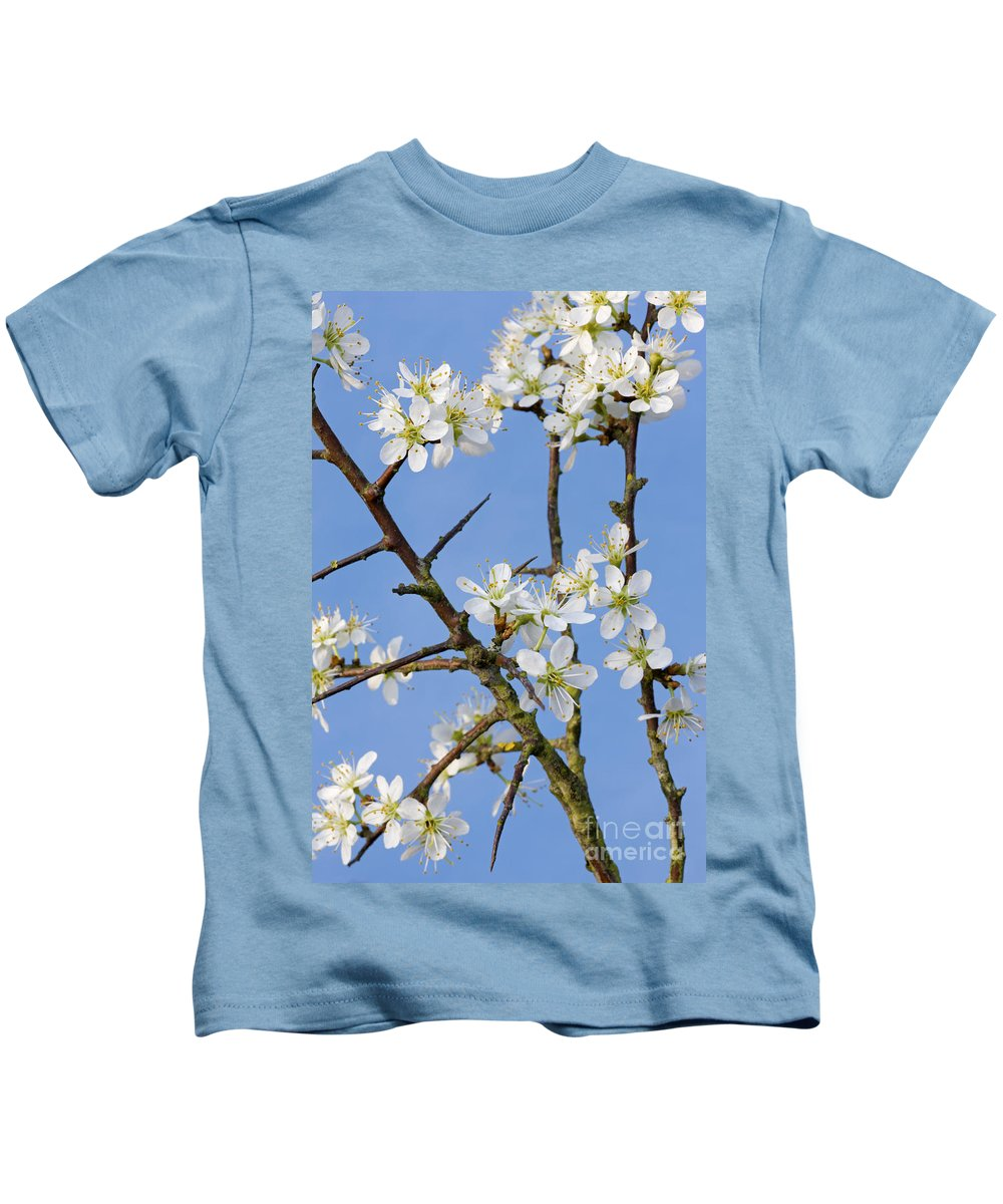Blackthorn Kids T-Shirt featuring the photograph 110506p221 by Arterra Picture Library