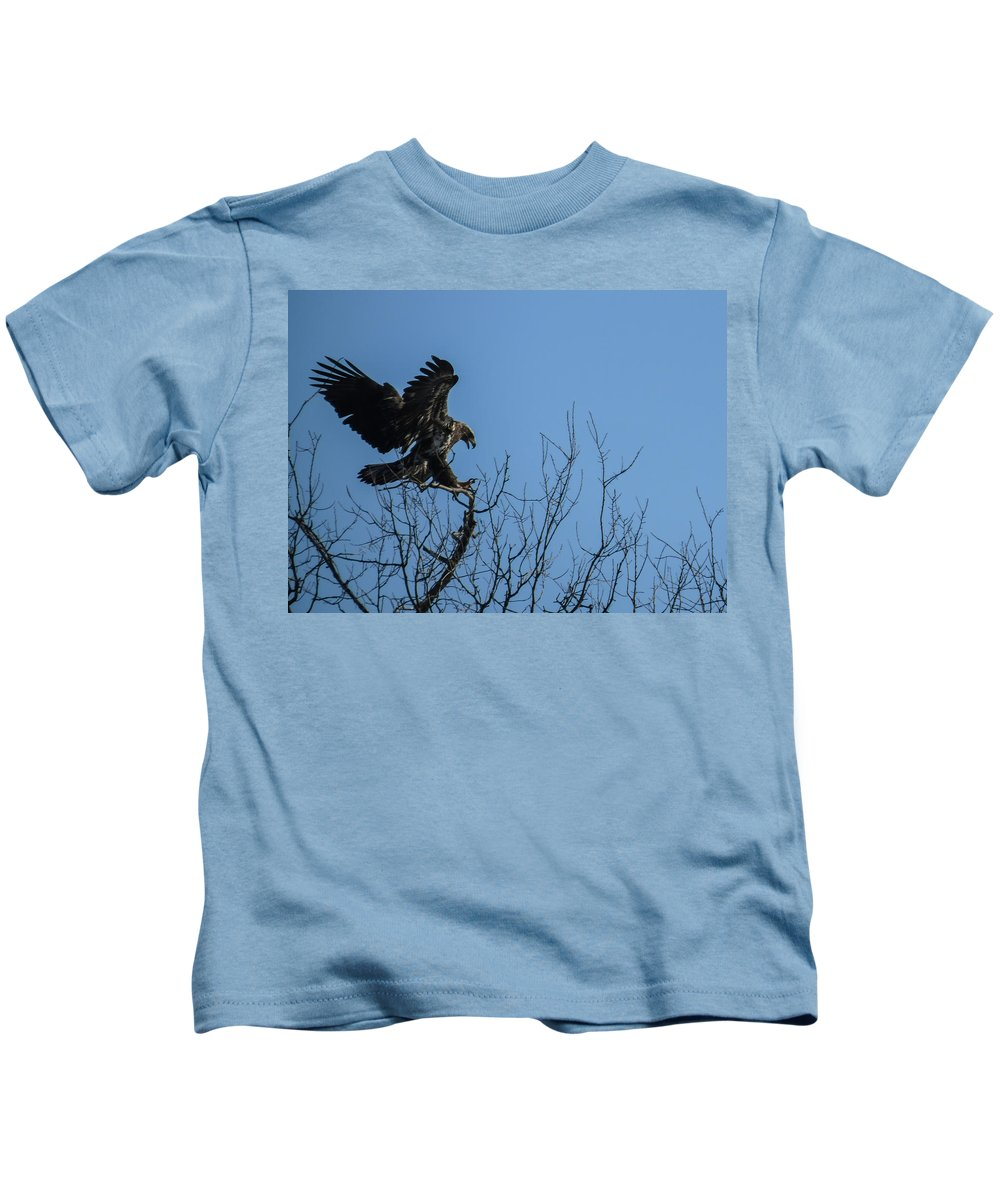 Avian Kids T-Shirt featuring the photograph Bald Eagle Juvenile Landing In Tree Top by Deb Fedeler