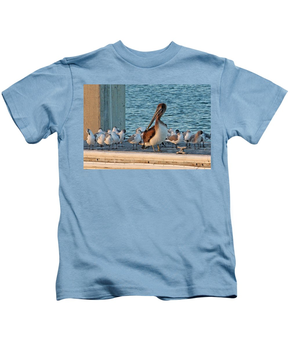 Brown Pelican Kids T-Shirt featuring the photograph Birds - Among Friends by HH Photography of Florida