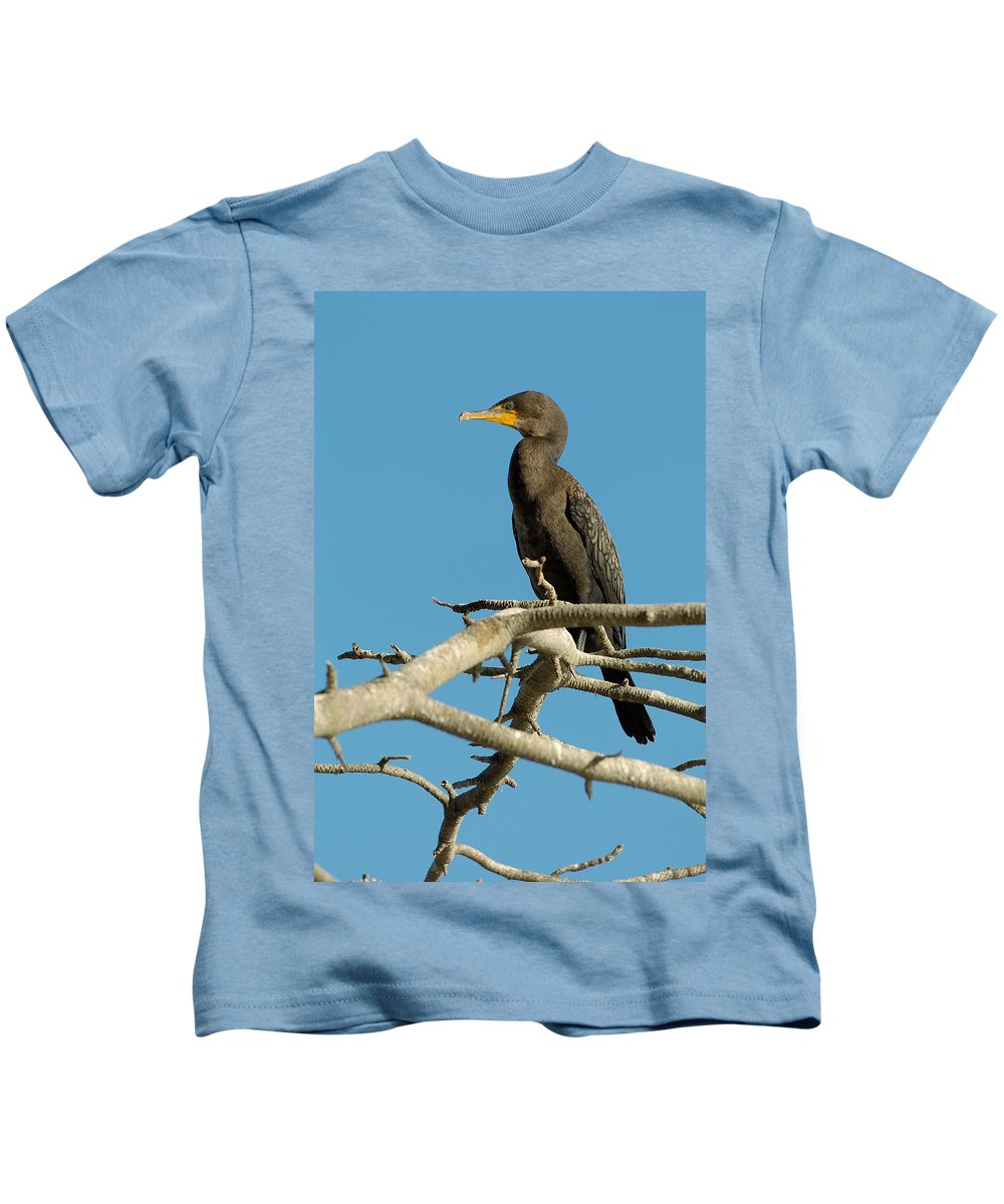 Cormorants Kids T-Shirt featuring the photograph Cormorant by Sebastian Musial