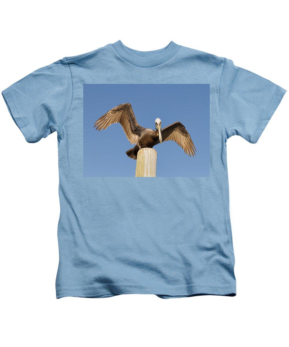 Pelican Kids T-Shirt featuring the photograph Florida Pelican by Kim Hojnacki