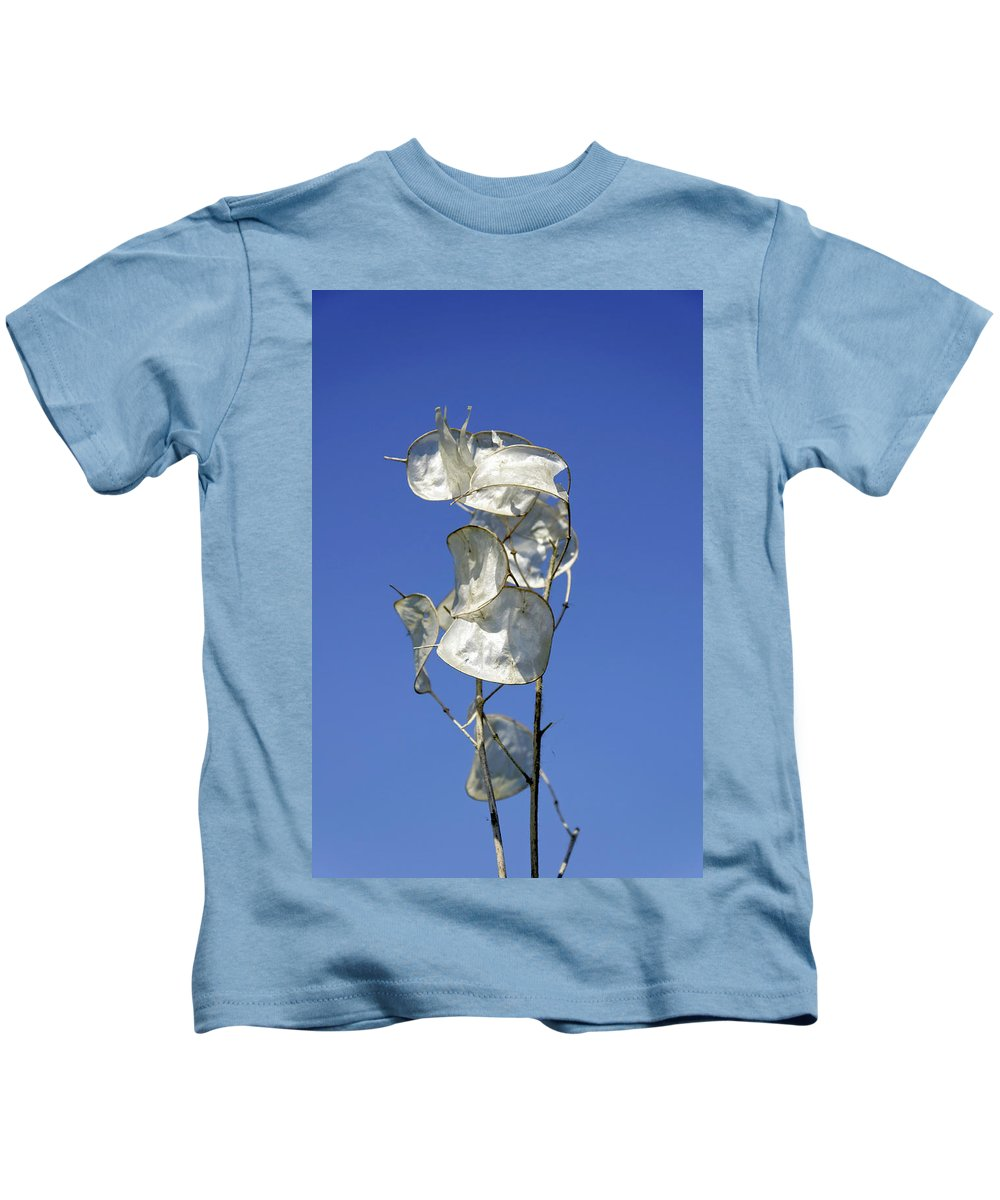 Drakelow Kids T-Shirt featuring the photograph Honesty Seed Pods by Rod Johnson