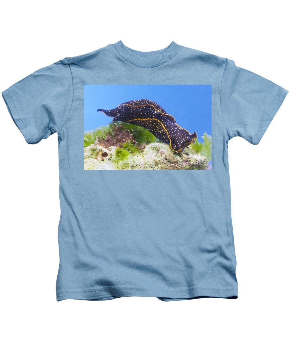 Navanax Kids T-Shirt featuring the photograph Navanax Inermis by Anthony Mercieca