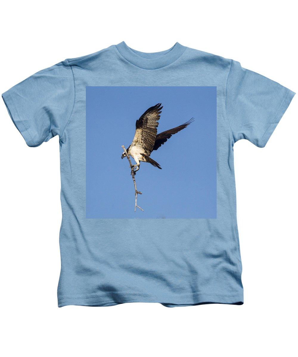 Doug Lloyd Kids T-Shirt featuring the photograph Nest Building by Doug Lloyd