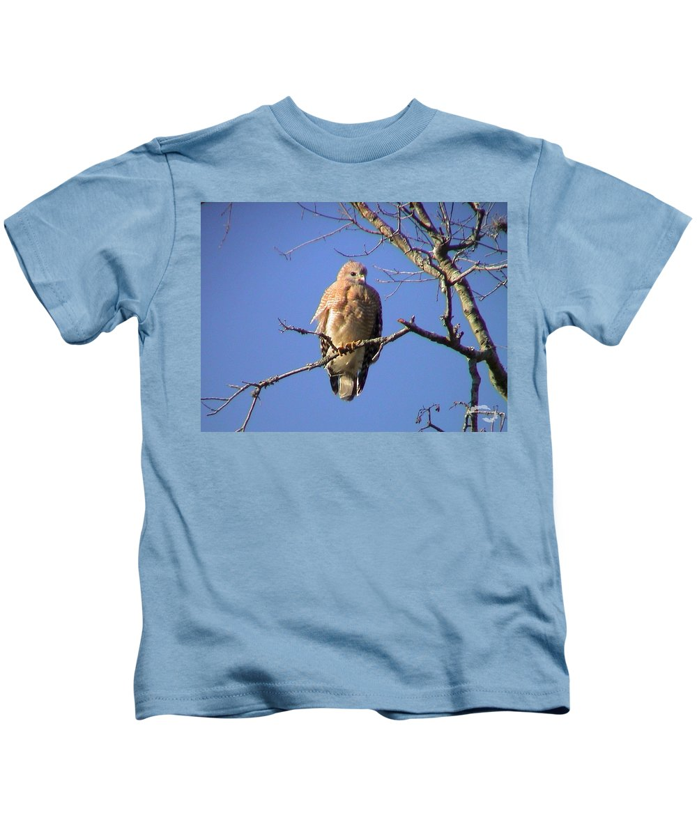 Wildlife Kids T-Shirt featuring the photograph Young Hawk by Robert Norcia
