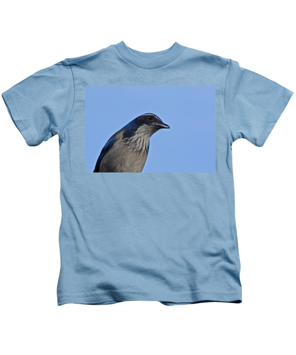 Birds Kids T-Shirt featuring the photograph Scrub Jay by Diana Hatcher