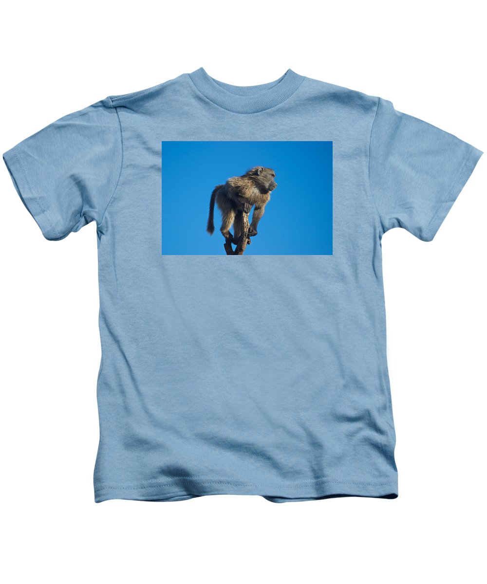 Baboon Kids T-Shirt featuring the photograph Sentry Baboon Namibia by David Kleinsasser