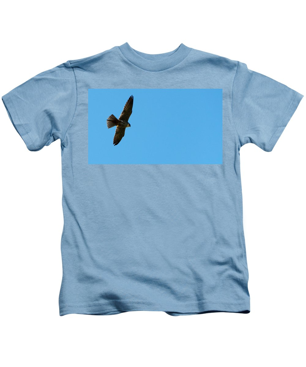 Bird Of Prey Kids T-Shirt featuring the photograph Soaring Freely by Focus Fotos