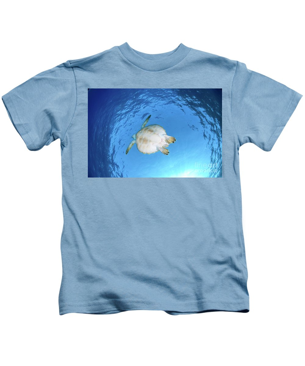 Green Kids T-Shirt featuring the photograph Green Sea Turtle by Hagai Nativ