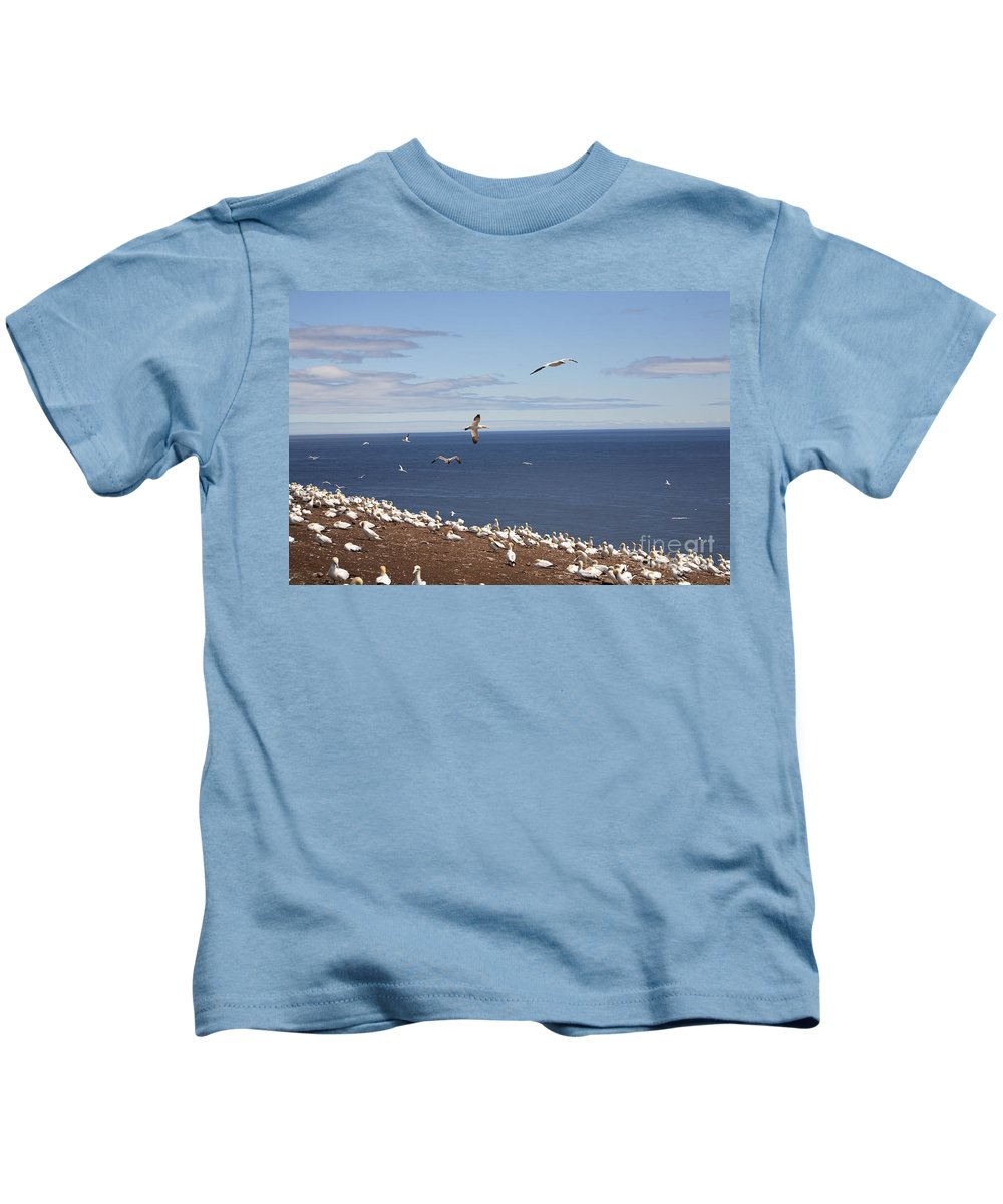Northern Gannet Kids T-Shirt featuring the photograph Gannet Colony by Ted Kinsman