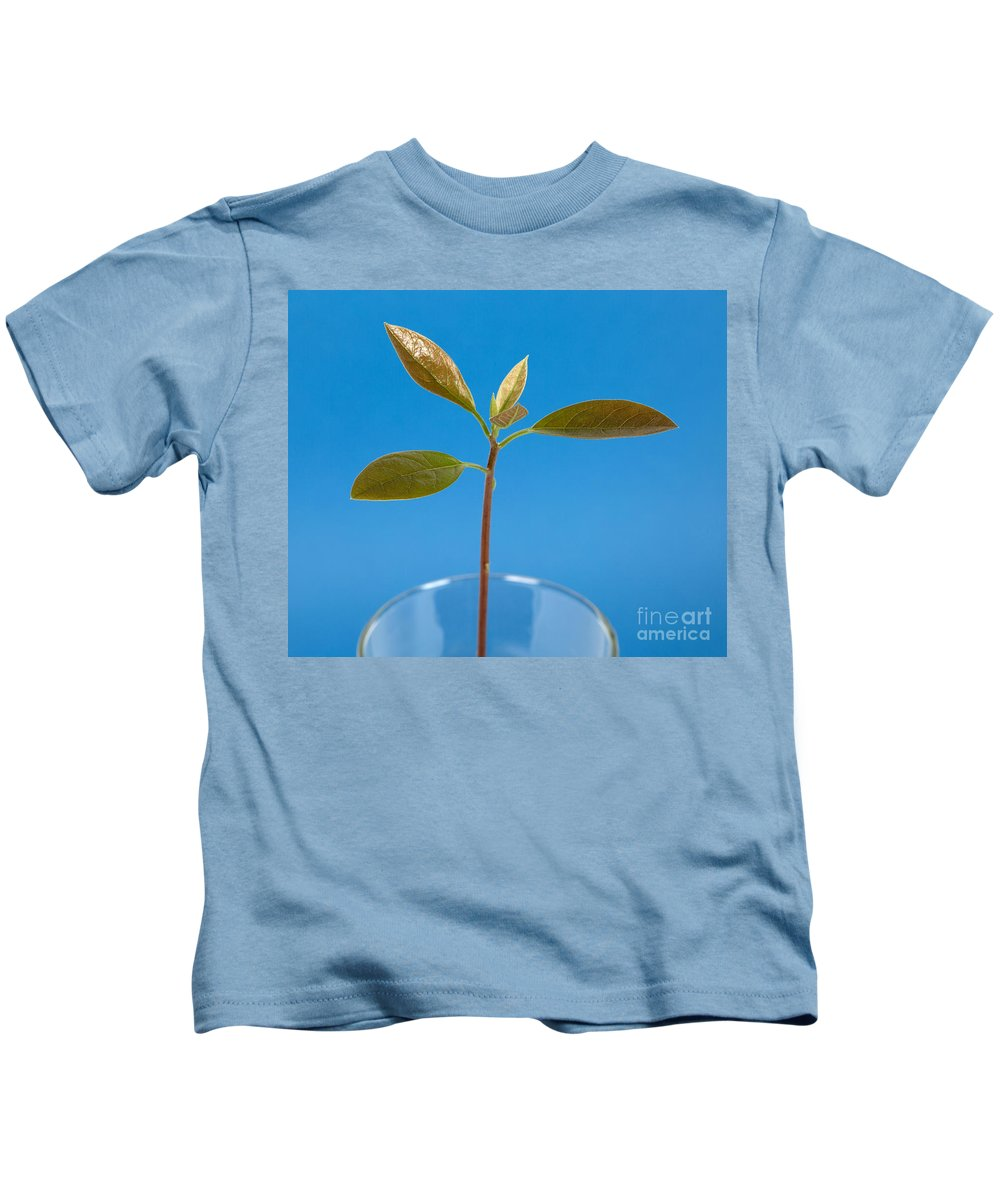 Plant Kids T-Shirt featuring the photograph Avocado Seedling by Ted Kinsman