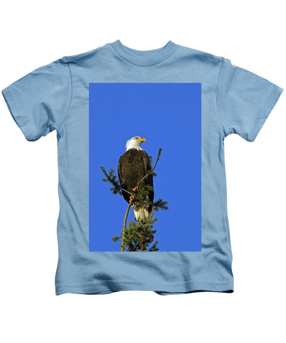 Bald Eagle Kids T-Shirt featuring the photograph Bald Eagle On Blue by Randall Ingalls
