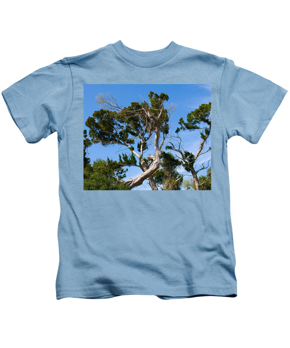 Cedar; Cedars; Tree; Florida; Timucuan; Indian; Mound; Shell; Midden; Oak; Hill; Flora; Branch; Weat Kids T-Shirt featuring the photograph Florida Cedar Tree by Allan Hughes