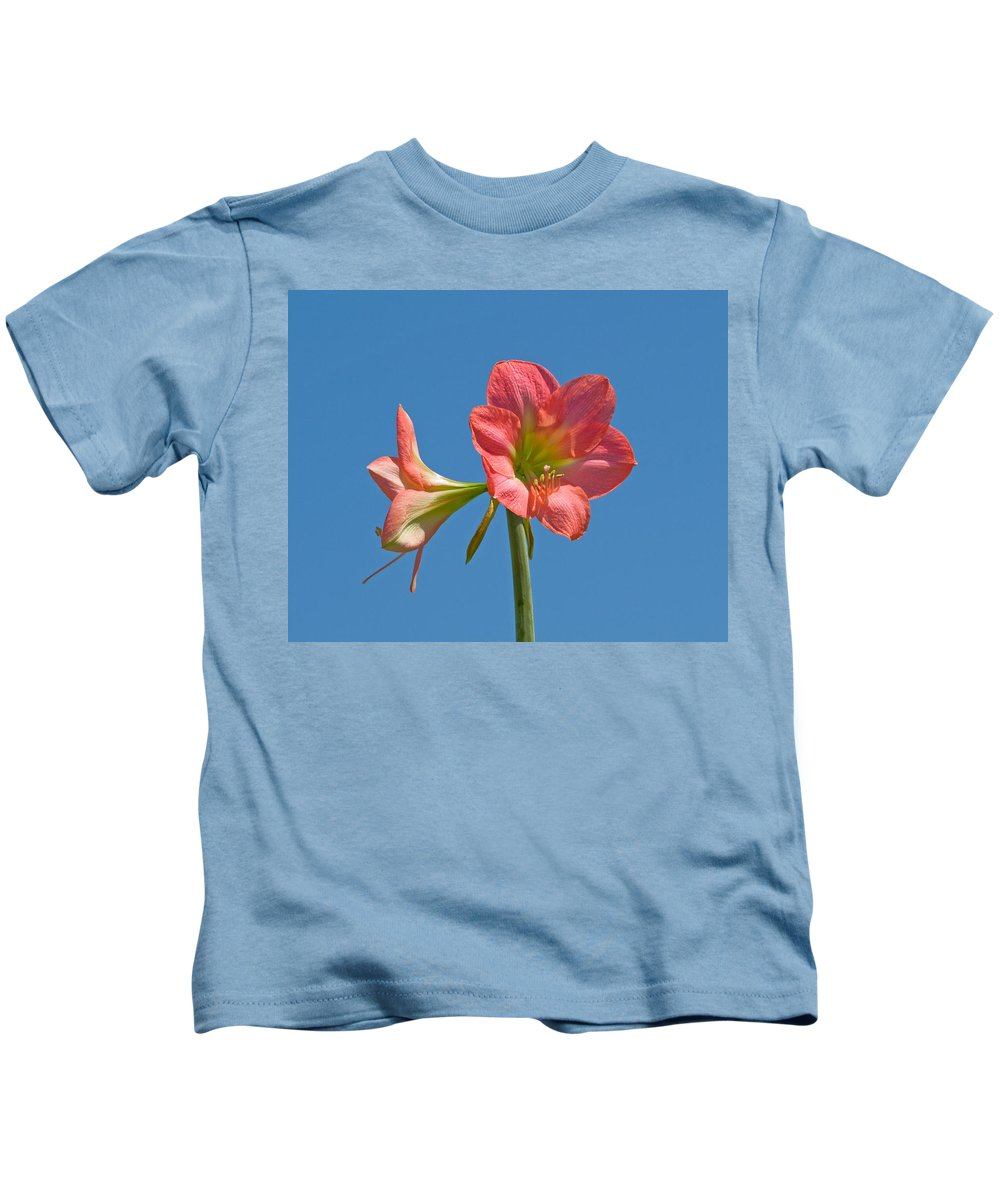 Hippeastrum; Amaryllidaceae; Belladonna; Lily; Amaryllis; Flower; Flowering; Plant; Bulb; Pot; Garde Kids T-Shirt featuring the photograph Pink Amaryllis Flowering In Spring by Allan Hughes