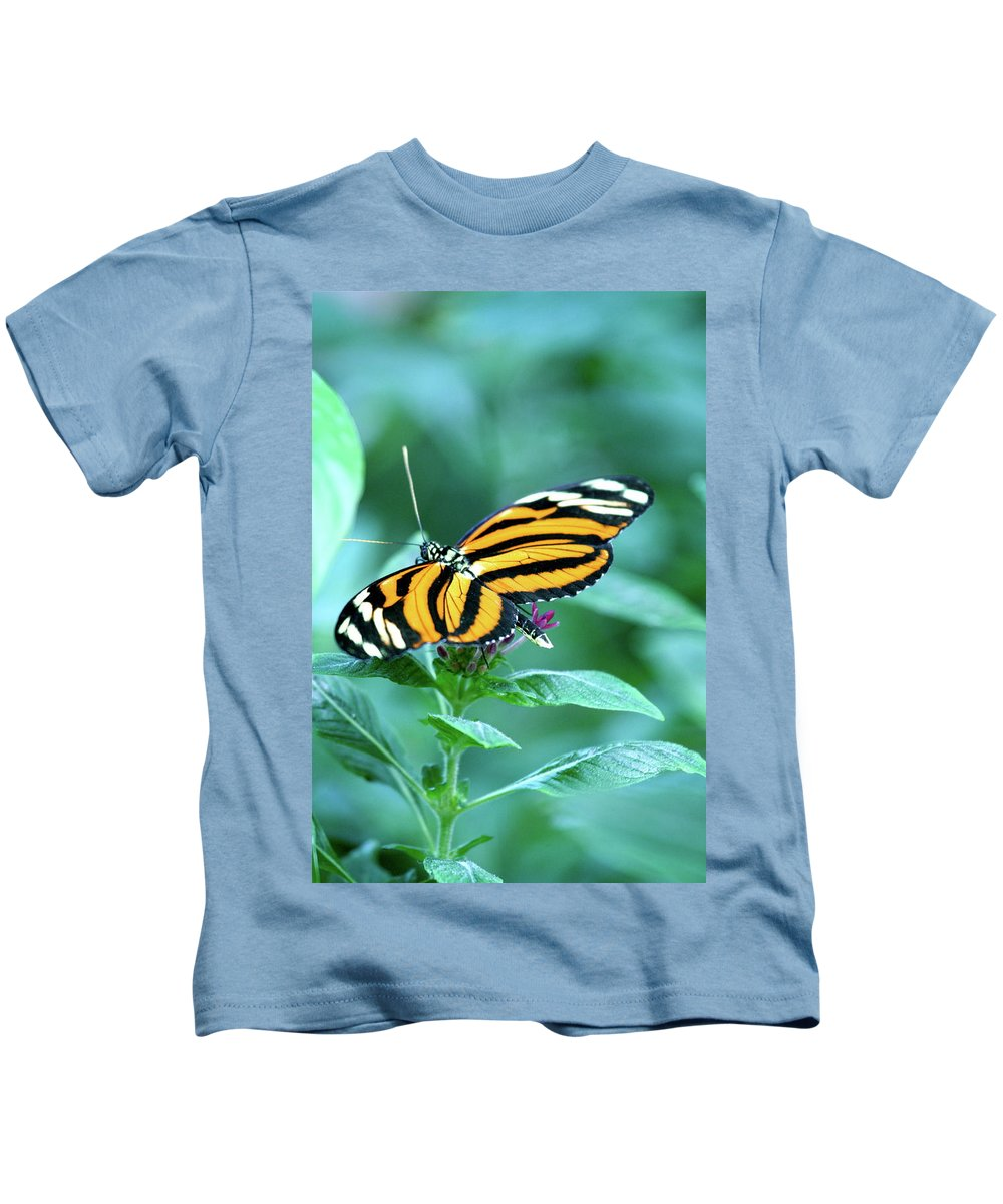 Butterfly Kids T-Shirt featuring the photograph Wing Wonders by Laddie Halupa
