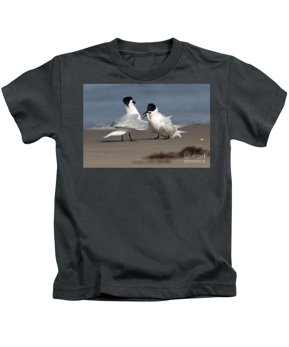 Animal Kids T-Shirt featuring the photograph Sandwich Tern Bringing Fish To Its Mate by Anthony Mercieca