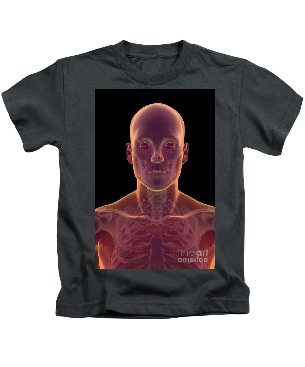 Collarbone Kids T-Shirt featuring the photograph Bones Of The Head And Neck by Science Picture Co