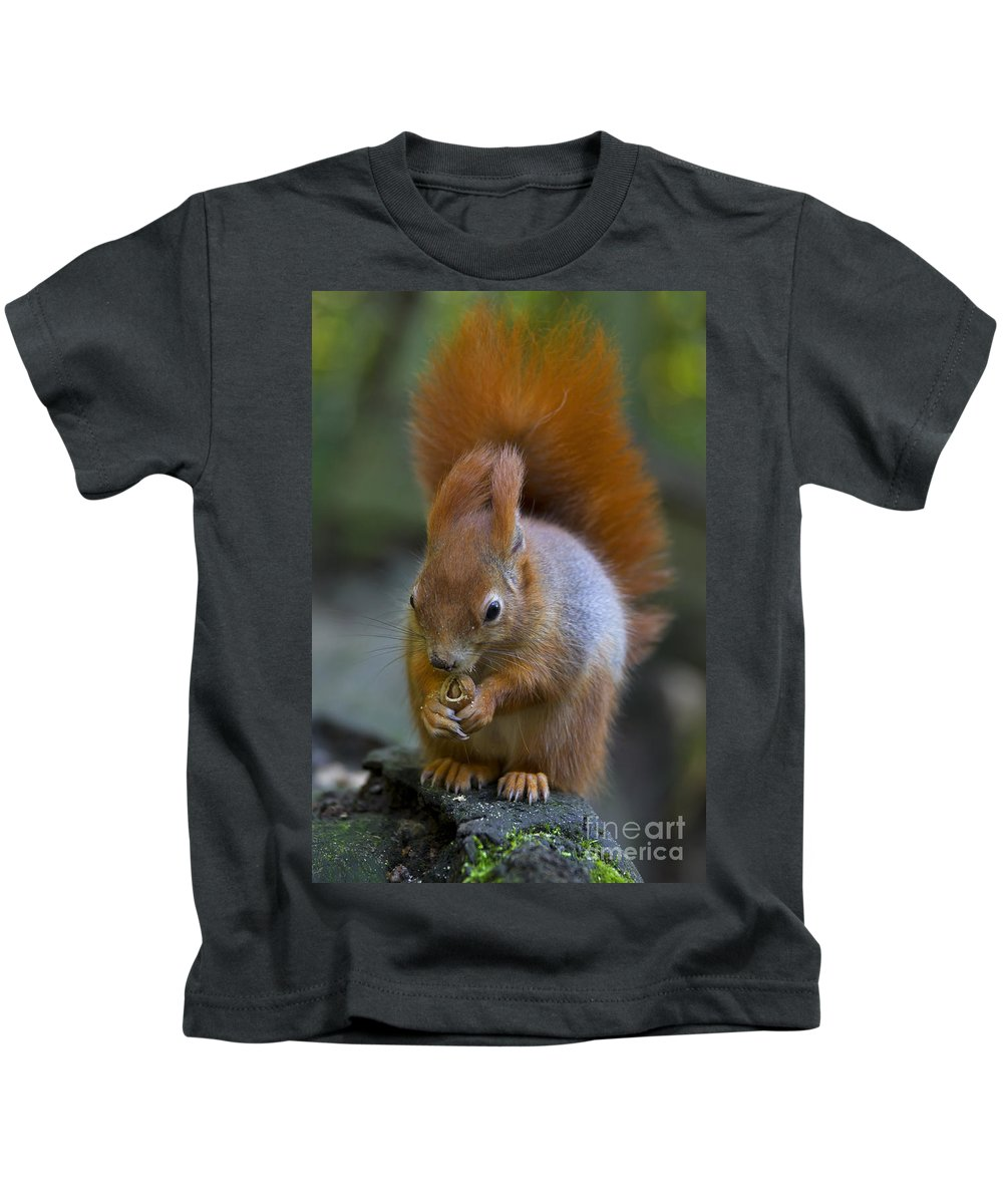 Red Squirrel Kids T-Shirt featuring the photograph 110307p076 by Arterra Picture Library
