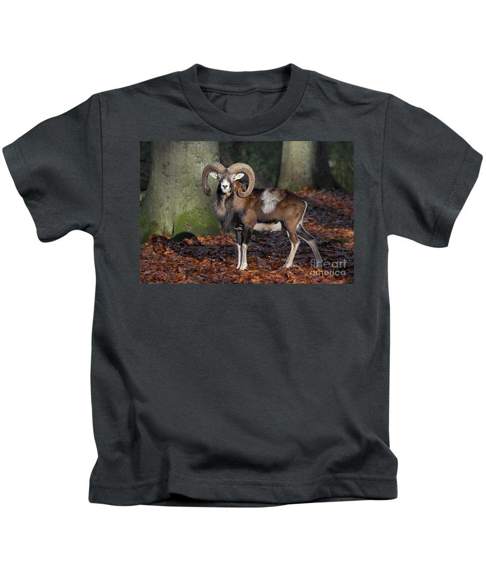 European Mouflon Kids T-Shirt featuring the photograph 110307p176 by Arterra Picture Library