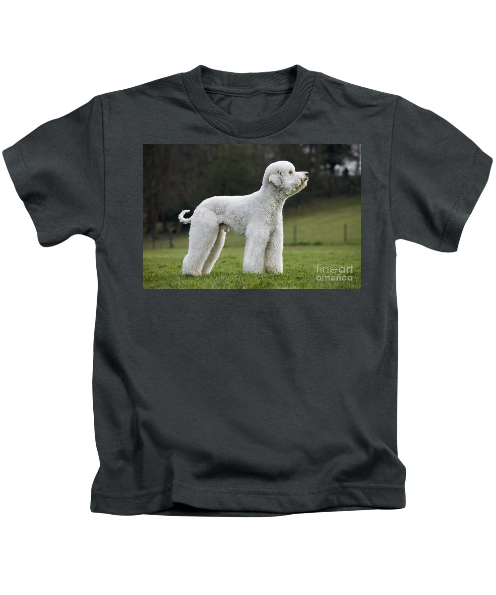 Standard Poodle Kids T-Shirt featuring the photograph 110506p121 by Arterra Picture Library