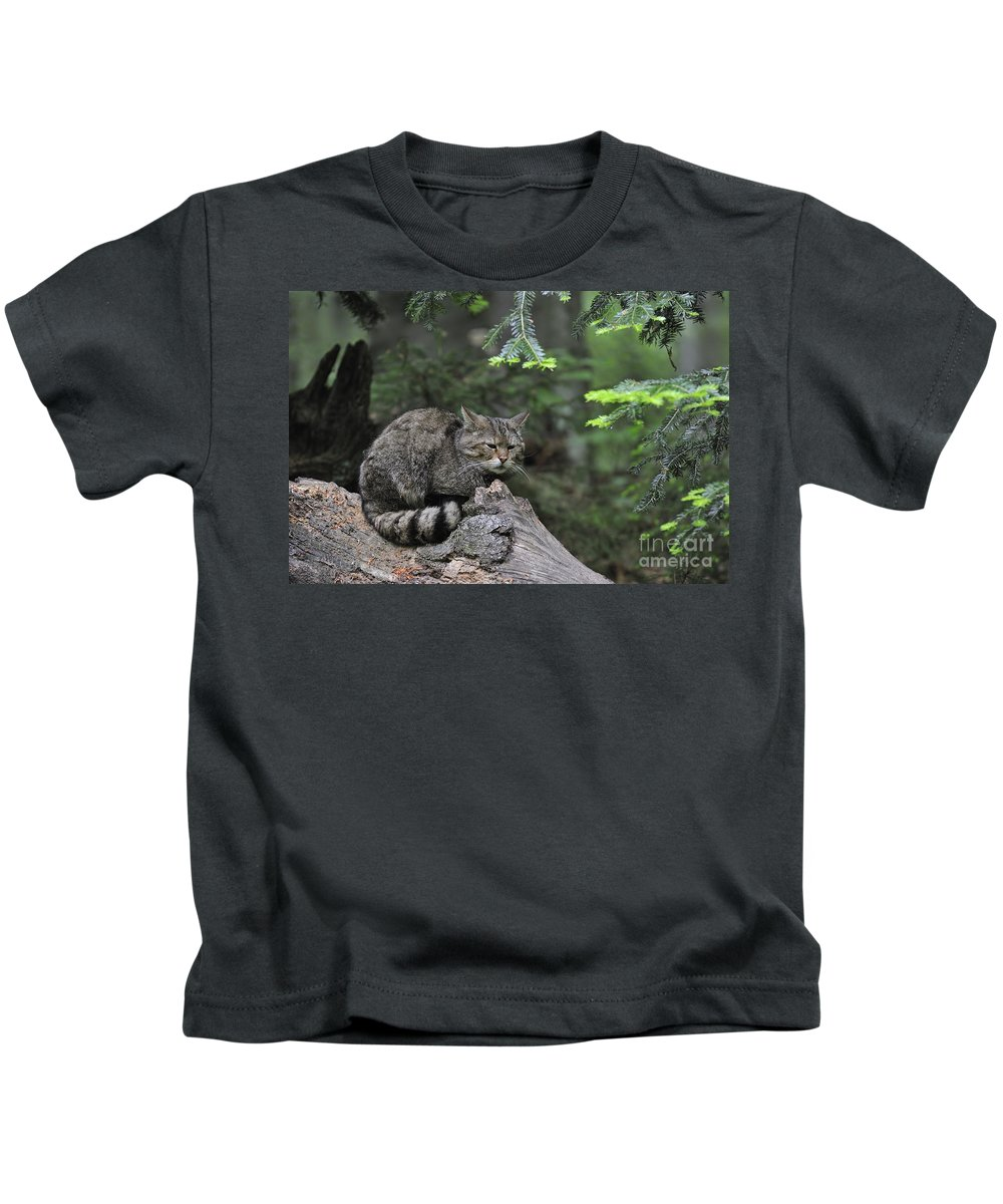 Wildcat Kids T-Shirt featuring the photograph 110613p008 by Arterra Picture Library